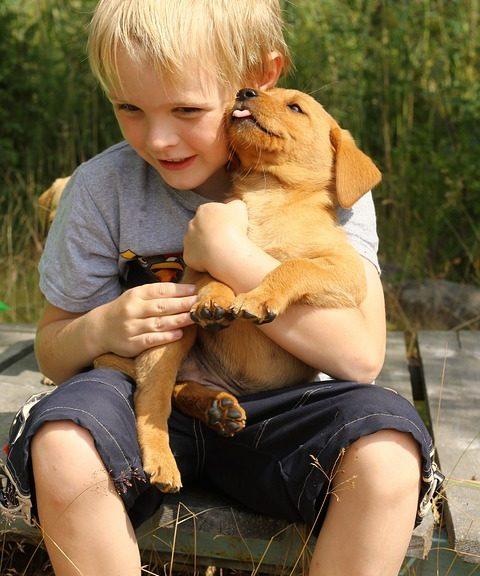 El mejor perro para niños